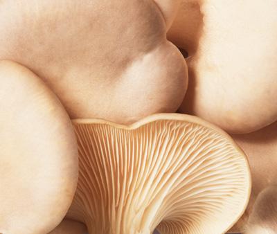 400x338px_Mushroom1