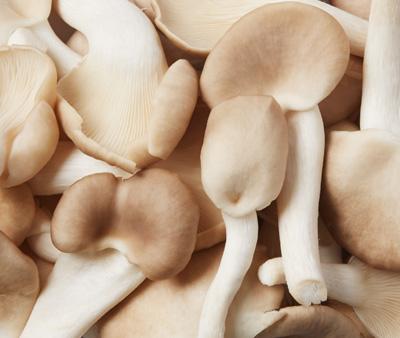 400x338px_Mushroom4