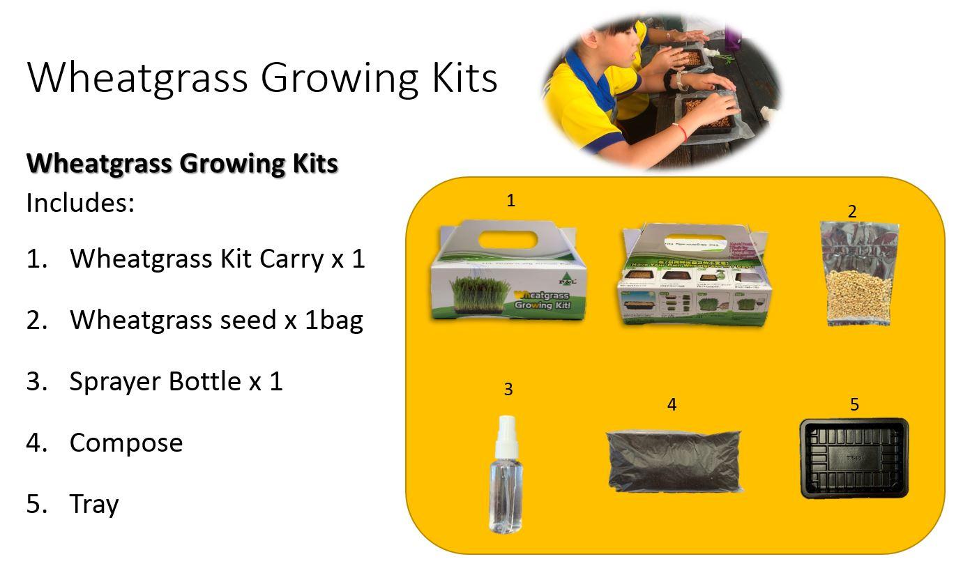 wheatgrassgrowingkit_detail